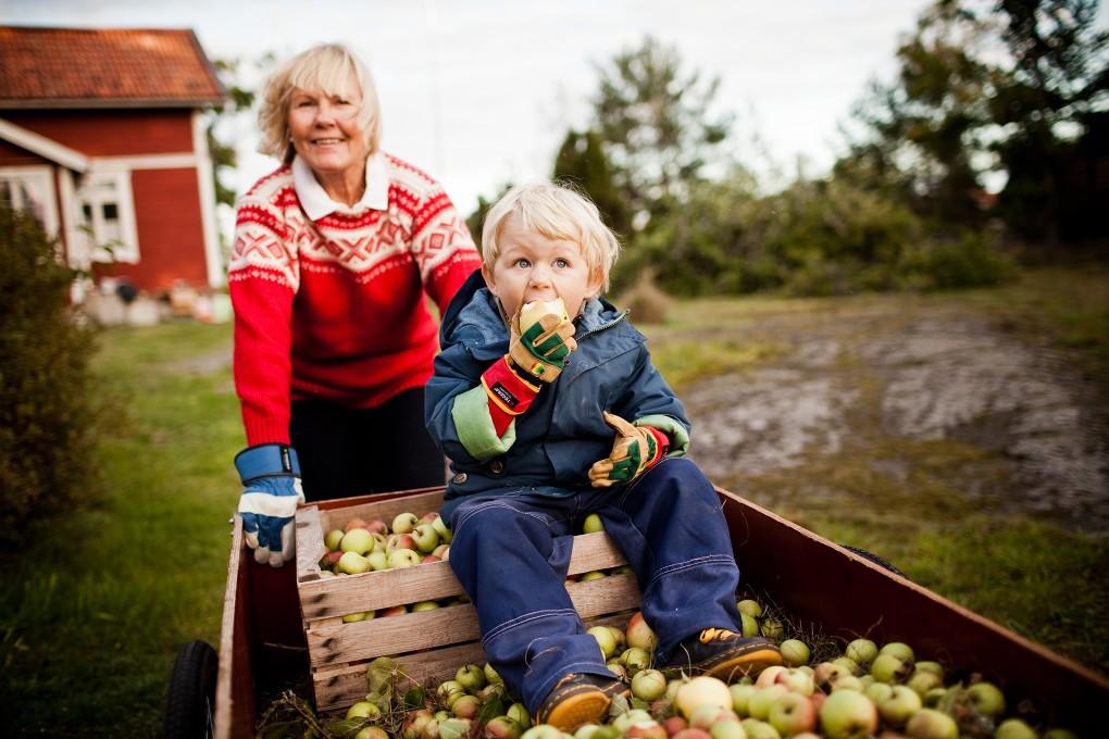 Höst i Stockholms skärgård. Fotograferat för Ikanos bildbank