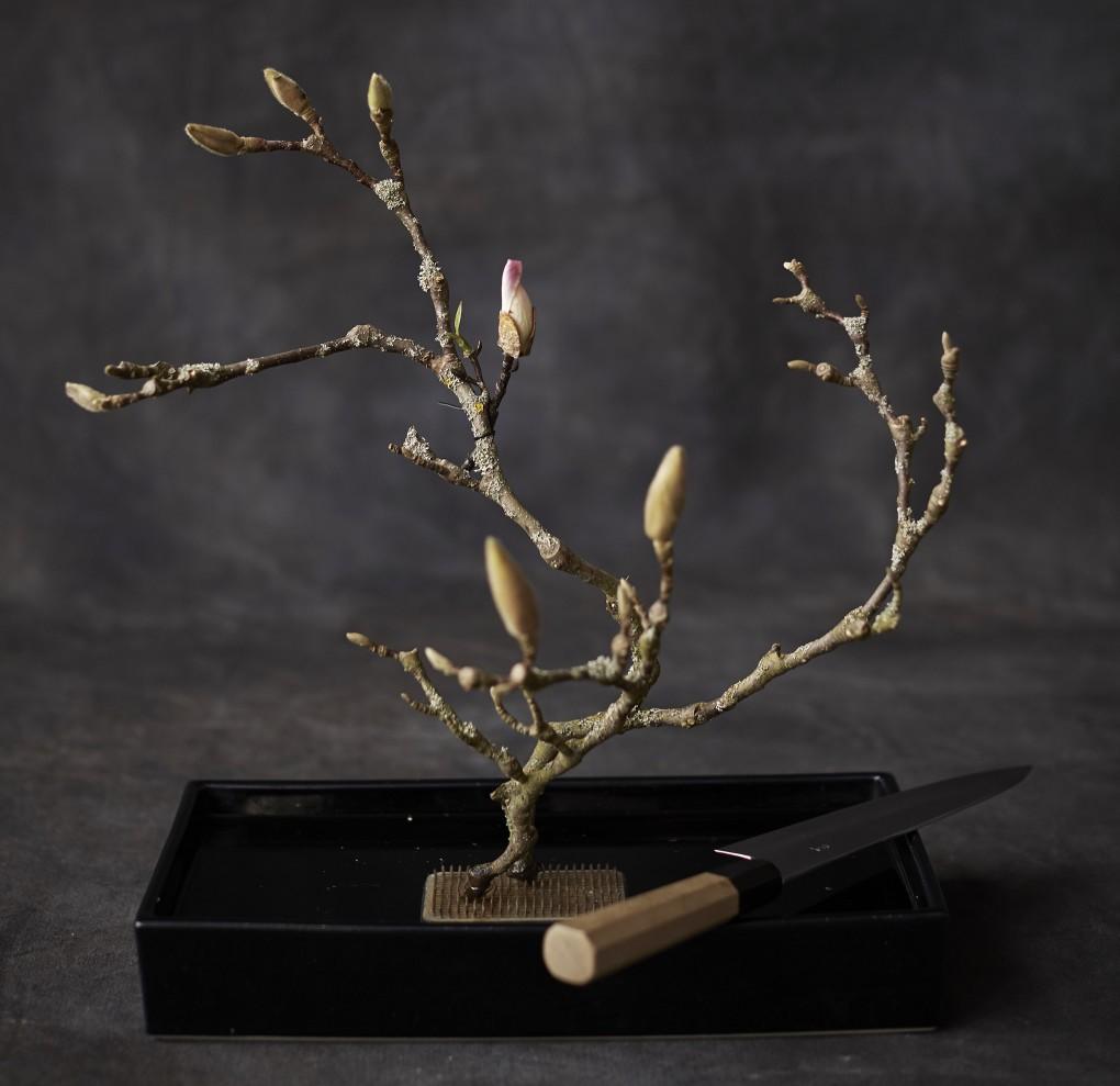 Ikebana av Magnoliakvistar samt en Japansk kniv. Fotograferat av Paulina Westerlind i studion